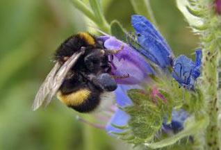 """Большинство пчел оказались """"правшами"""""""
