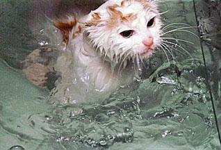 Кот пересек океан в трюме корабля