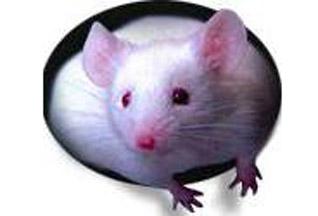 Британский МИД завтракал с мышкой