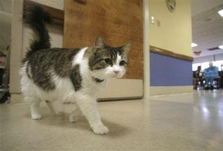 В американском городке появился кот-предвестник смерти