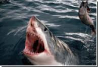 Сахалинские рыбаки поймали рыбу весом в тонну