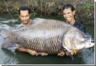 Рыбаки в Таиланде выловили 120-килограммового карпа