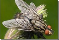 В Китае начнут зарабатывать на мухах
