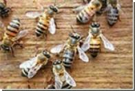 Медики: Укусы пчел могут довести человека до летального исхода