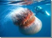 В Италии появятся отряды спасателей от ядовитых водорослей и медуз