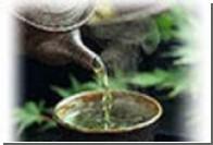 Большие дозы зеленого чая могут убить