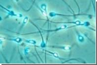 Зачатие с помощью клонированных сперматозоидов приводит к развитию отклонений
