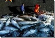 Японцы избавят от стресса рыб