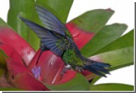 Яркий окрас птиц делает их уязвимыми для радиации