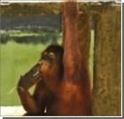 Курящую обезьяну сошлют на реабилитационный остров