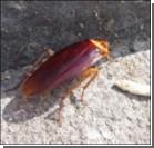 Гигантские тараканы захватили Неаполь