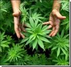 В Колумбии легализовали марихуану и кокаин