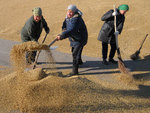 Экспорт российского зерна в 2012 году упадет вдвое