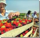 У украинцев отбирают возможность сезонных заработков