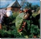 Мужчина умер от яда для колорадских жуков