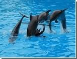 Дельфинов заподозрили в использовании нелинейной математики