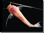 Потерянный орган чувств пещерным рыбам заменили зубы