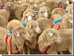 Сбиться в стадо овец заставил собственный эгоизм