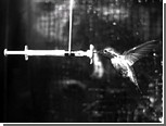 Колибри продемонстрировали ученым полет во время дождя
