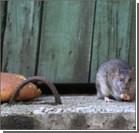 На киевской набережной бешеная крыса укусила мальчика