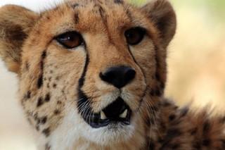 Москвичка увидела гепарда во дворе жилого дома