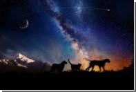 Американская компания организует «космические похороны» для животных