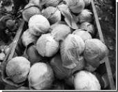 Эксперты: Запрет польских овощей и фруктов - лишь начало