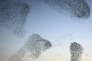 Стаи птиц подчинились законам жидкого гелия