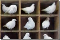 Физики обсудили место кроликов в ящиках