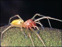 Жителей Австрии терроризирует паук