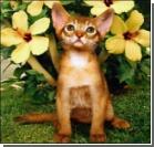 Как котенок хозяйку обхитрил