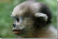 Индийское метро патрулируют обезьяны