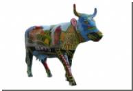 Американцы разводят карликовых коров
