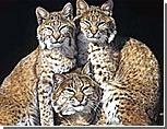 Кишиневский зоопарк превратится в сафари-парк