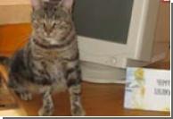 Кошка из Луцка каждый день ходит в библиотеку