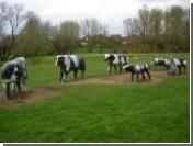 К бетонным коровам подведут высокоскоростной интернет