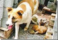 Китайская собака стала символом материнства