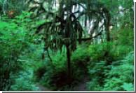 Выбросы азота в атмосферу благоприятно влияют на растения