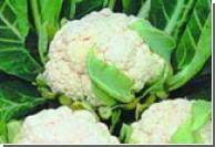 Цветная капуста и брокколи снижает риск развития рака простаты