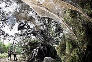 В Техасе обнаружена паутина длинной 182 метра