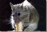 Мыши умеют определять концентрацию углекислого газа
