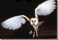Ученые применили методы Павлова к совам