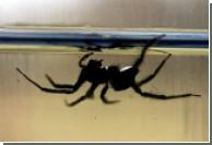 Уникальные пауки плетут емкости для жизни под водой