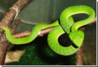 Ученые разгадали секрет длительных голодовок змей