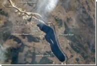 Чернобыль - рай для дикой природы?