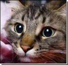 У кошек и котов нашли любимые лапы