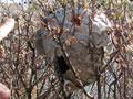 Следствие установило причину масштабных пожаров в Греции