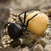 На Херсонщине пауки продолжают калечить людей