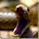 На Херсонщине женщину укусила ядовитая змея