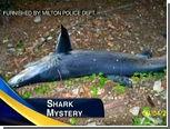 Жители Новой Англии нашли в лесу акулу